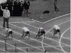 Les coulisses de l'exploit : L'Athlétisme
