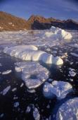 Débâcle de la banquise arctique