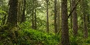 Great Bear Rainforest - A forest solution in the making