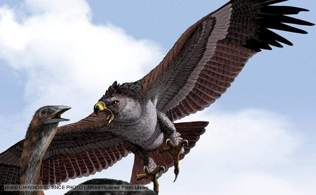 Haast's eagle preying on a giant moa