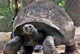 Mort de la plus vieille tortue au monde...<br />(Courtesy of AP Photo/Bikas Das )