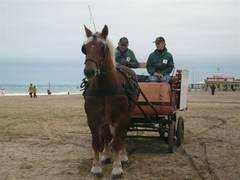 Chales Ludwig meneur et Quadrille cheval HN