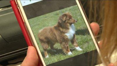 Corrèze : un chien-guide pourrait sauver cette femme atteinte du diabète