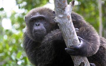Le soigneur d'une trentaine d'années connaissait très bien le singe selon le directeur du parc zoologique.