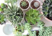 Procura por cultivo de plantas aumenta no isolamento | Reprodução