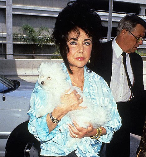 Devoted: Liz Taylor placed her dog Daisy at the centre of her kingdom - thought it seems unlikely she will be in with a shot of the millions