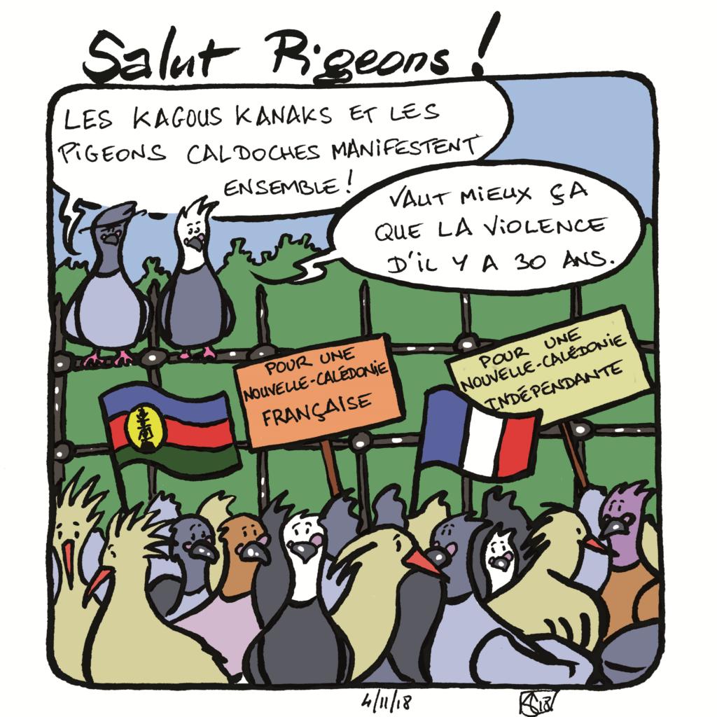 Pigeons 13