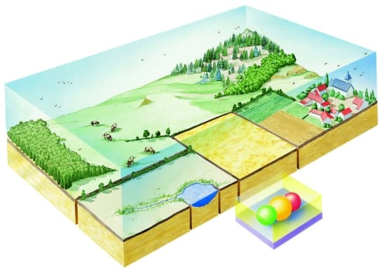 Des écosystèmes dans un paysage agricole.