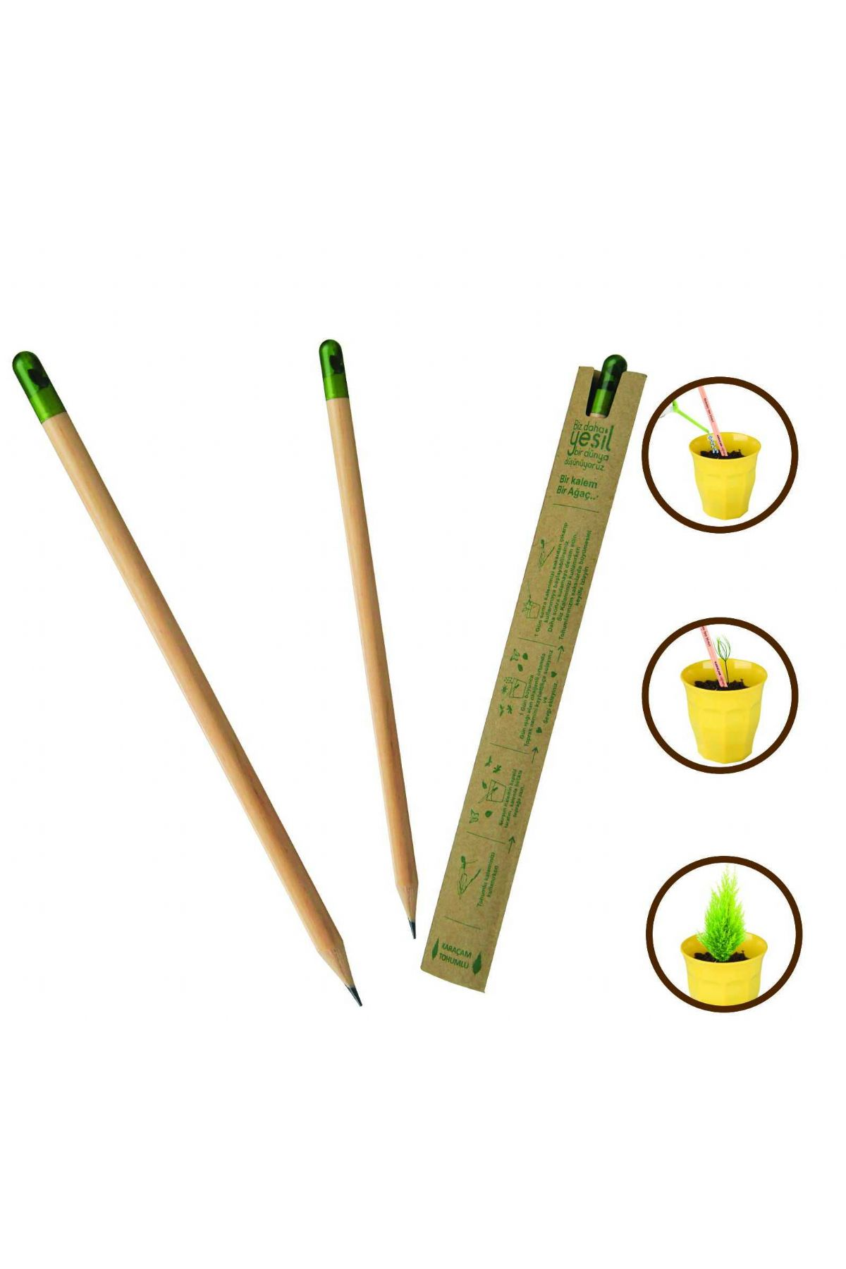 SEED PENCIL (IN YOUR NAME, 3 SEEDLING PLANTING WILL BE DONE, A SEEDLING WHICH GROWS FOR YOU)