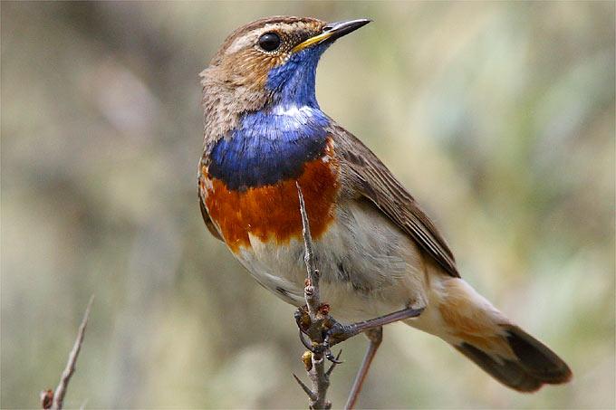 NABU-Vogelporträts
