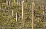 NexGen tree shelters installed on a site to protect saplings