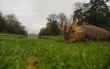 Hunters took selfies with the dead deer