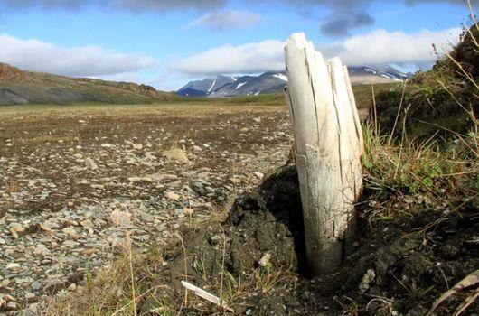 Le plus vieil ADN jamais séquencé donne des informations précieuses sur l'arbre généalogique des mammouths