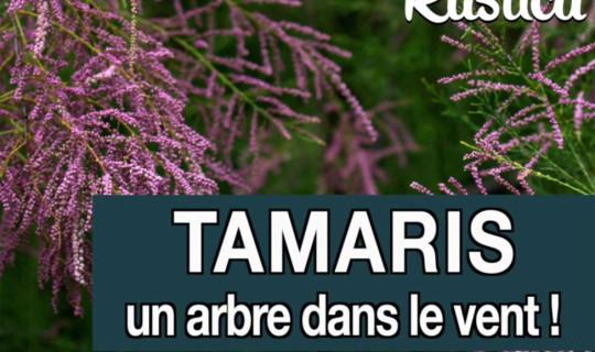 Le tamaris, un arbre à planter au jardin